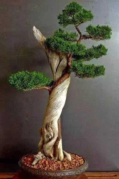 盆栽 起源于古代园林造景 由中国传统的园林艺术变化而来 以摹仿自然