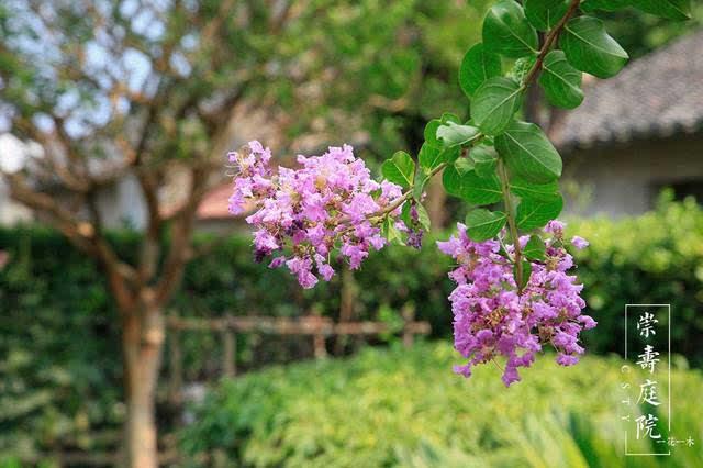 闲看庭前花开花落,漫随天外云卷云舒.
