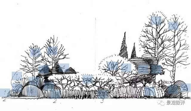 手绘园林灌木线稿