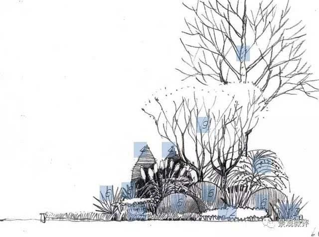 园林乔木手绘效果图