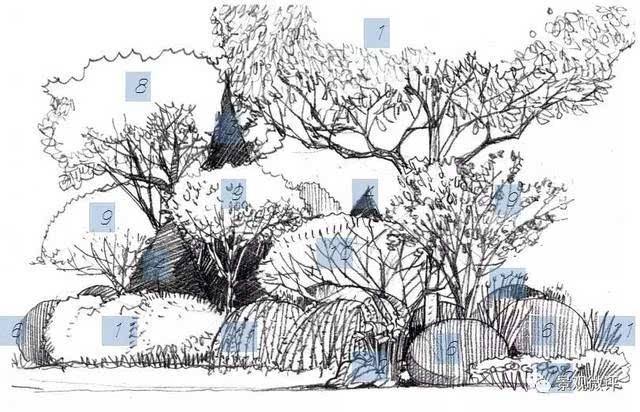 植物组团平面手绘