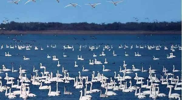 草原天路 花田草海 天鹅湖湿地二日游