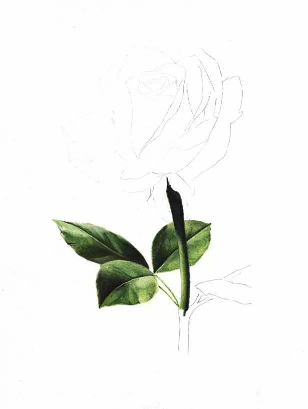 用铅笔画一朵红玫瑰,送给女朋友一份永不凋零的爱!