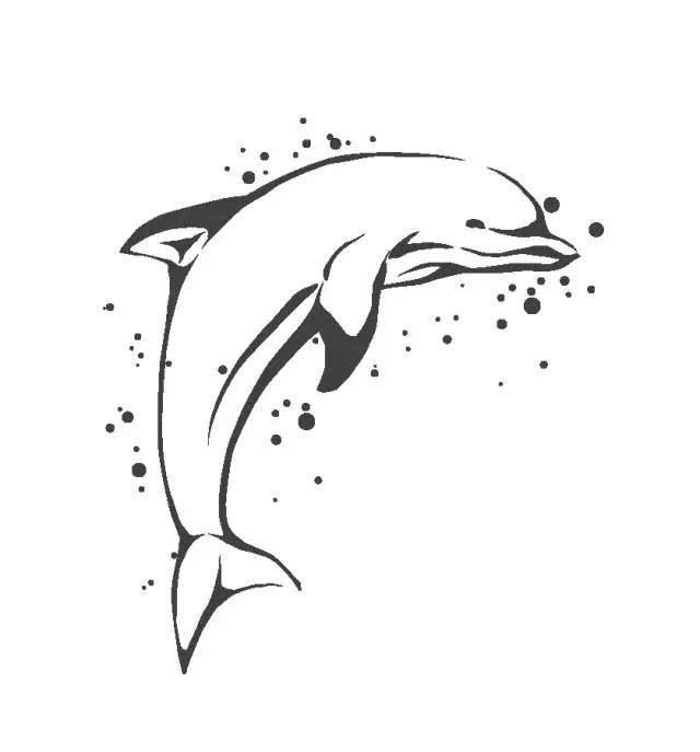 关于海豚的图片简笔画