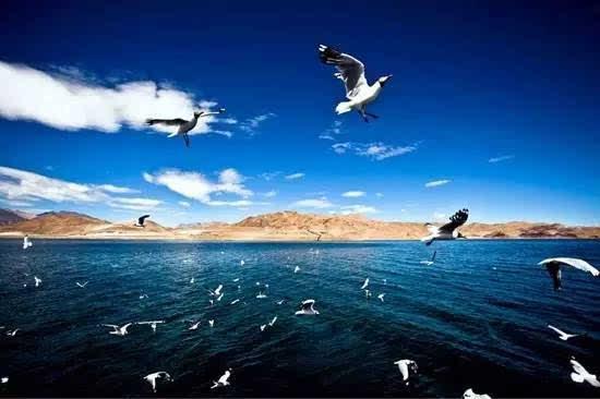 刘和刚 黑鸭子组合唱的《鸿雁》你肯定没听过,原来这么美!
