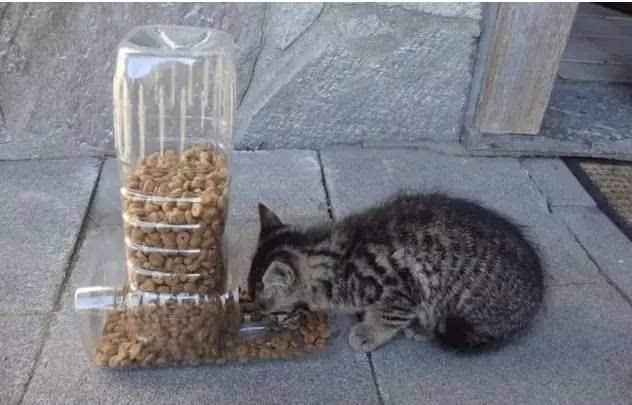 手工小制作 易拉罐小动物