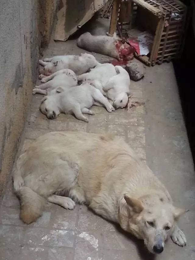 动物们悲伤的眼神.可以不爱,请别伤害!