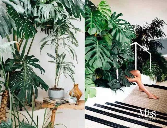 植物算是ins家居中最常见的装饰,清爽的绿色可以让整个空间显得清新又