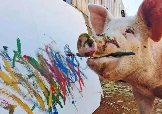 世界上唯一一头会画画的猪,猪都那么拼,你还不努力!图片
