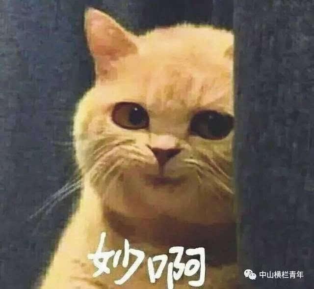 壁纸 动物 猫 猫咪 小猫 桌面 640_588