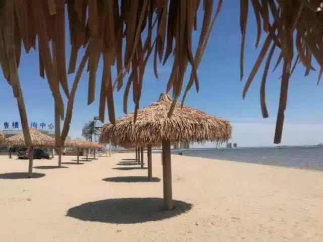 东戴河私人海滩 海鲜大咖 北戴河乐岛海洋王国纯玩四日游!图片