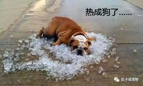 冬天会不会中暑_大暑来了,怎么预防狗狗中暑