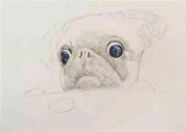 教你画一个萌萌的彩铅八哥犬