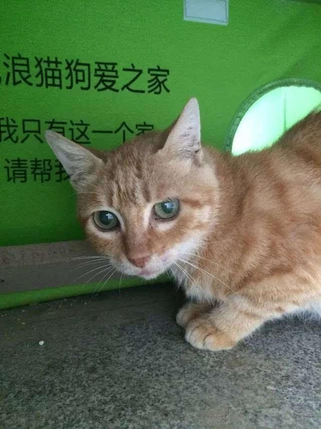 【动物小百科】如何帮助猫咪更快的熟悉新家?