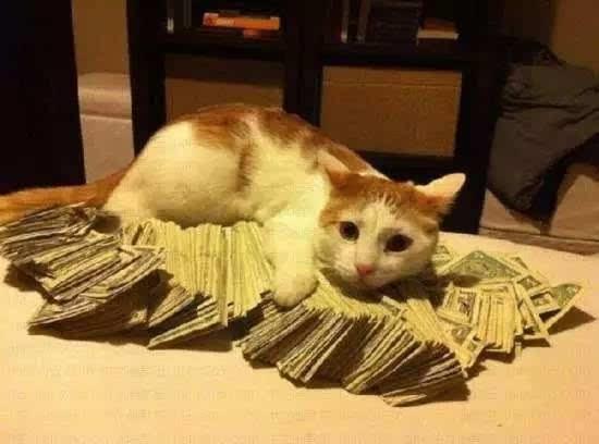 壁纸 动物 狗 狗狗 猫 猫咪 小猫 桌面 550_408