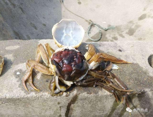壁纸 动物 甲壳类 昆虫 桌面 640_490