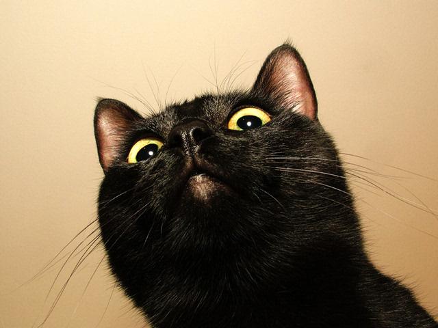 在欧洲和北美的许多地方认为黑猫是不幸的标志,而在英国和澳大利亚