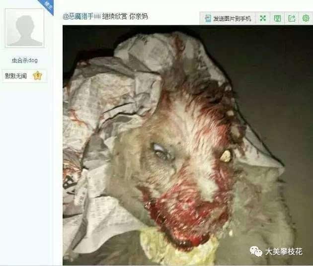 淫虐杀动物被杀的案件_恐怖!攀枝花一男子长期虐杀动物并网上传播,引发众怒遭人肉!