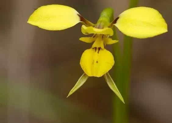 全世界最像动物的5种植物,萌化了