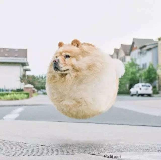 如果动物们都变成了球形的话