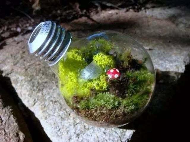简单介绍一下灯泡用来做油灯的步骤 ▽ 材料:灯泡,胶带,棉线(鞋带也