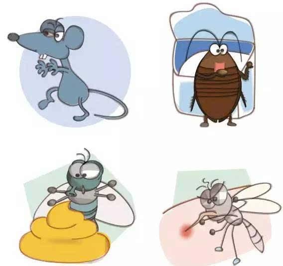 什么东西灭苍蝇蚊子最有效