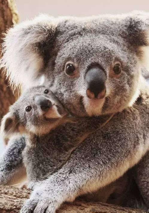 如果澳洲动物玩朋友圈,那么一定是这样的
