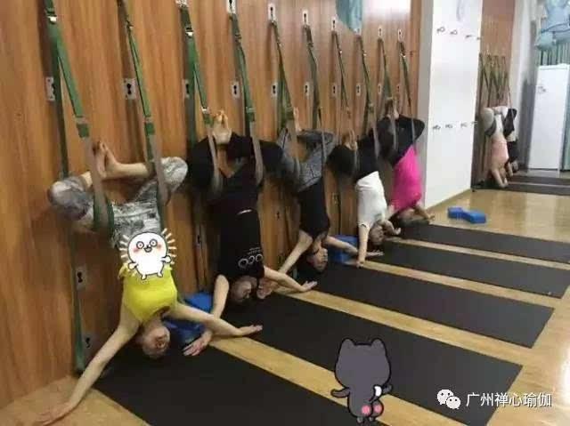 何萍老师 擅长:女性瑜伽 精准瑜伽 呼吸入门 肩颈理疗 纤体瑜伽 简艳图片