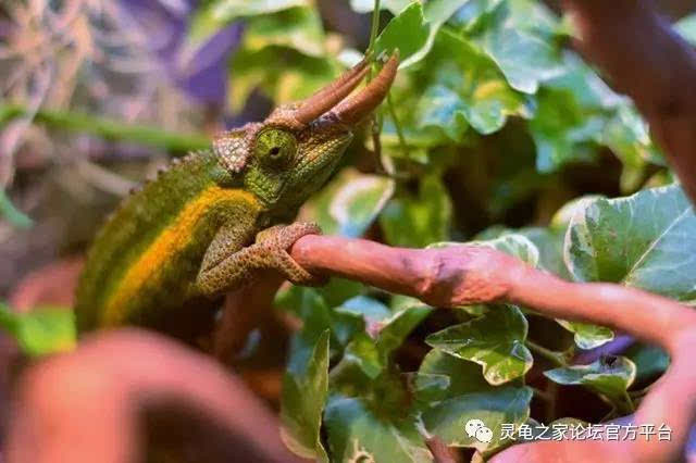 爬行类动物饲养环境概述
