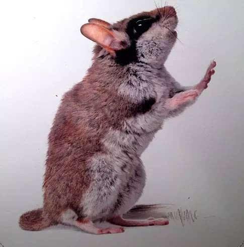 彩铅动物教程图解步骤
