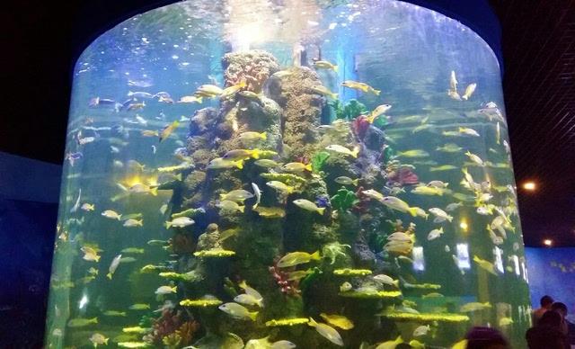 883我爱自驾游丨石林冰雪海洋世界 石海温泉酒店 黑石图片