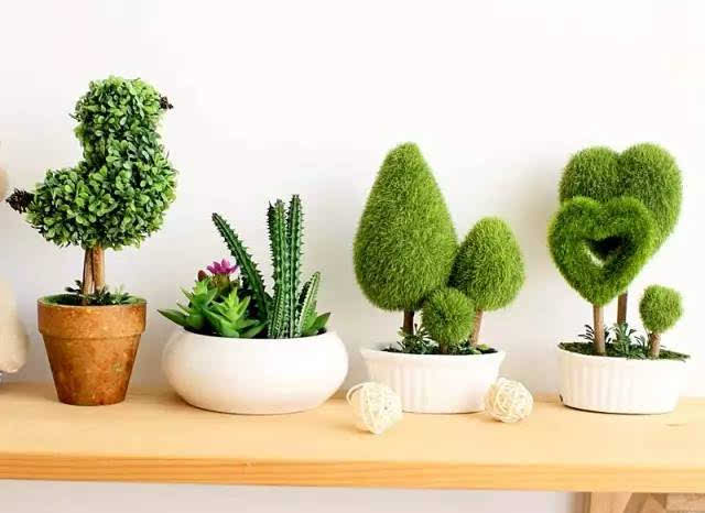 花盆,专用土,装饰沙石和diy工具 您可以亲手制作盆栽 尽情享受diy的