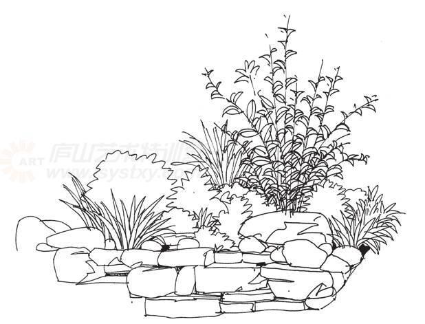 ①线稿表现要注意植物和山石的层次关系及植物的疏密