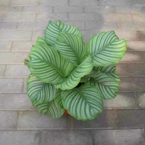 ins网红植物,居然便宜,提升