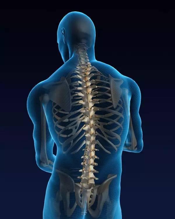 人体脊椎有七节颈椎、十二节胸椎、五节腰椎、一节骶椎及尾椎所连结
