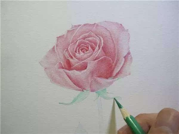 教程| 教你用彩铅画一朵玫瑰花