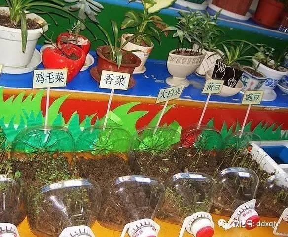 植物区角布置图片