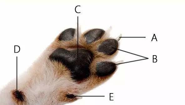 四个爪子的动物图片