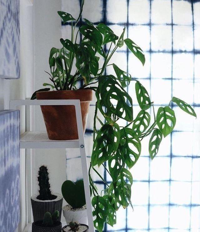 ins网红植物,居然便宜,提升空间逼格必备图片