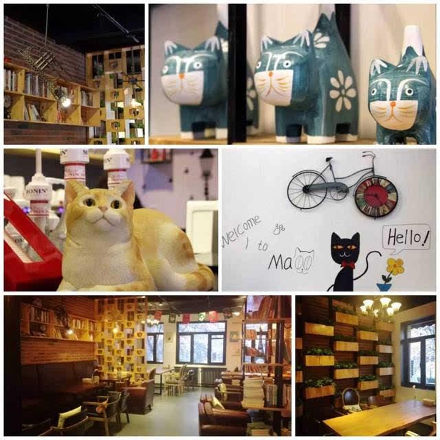 超治愈的猫咪咖啡馆,能消磨你一整个午后!