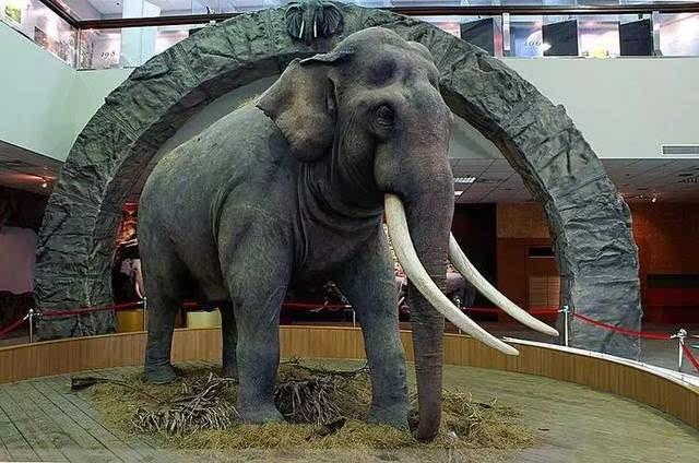 作了一幅对联道,现在它的标本被安放在木栅的台北市立动物园的教育馆.