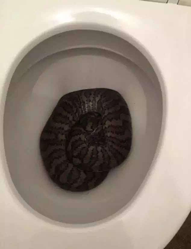 【心累】在澳洲上厕所都要小心!四川手把手小吃v厕所图片