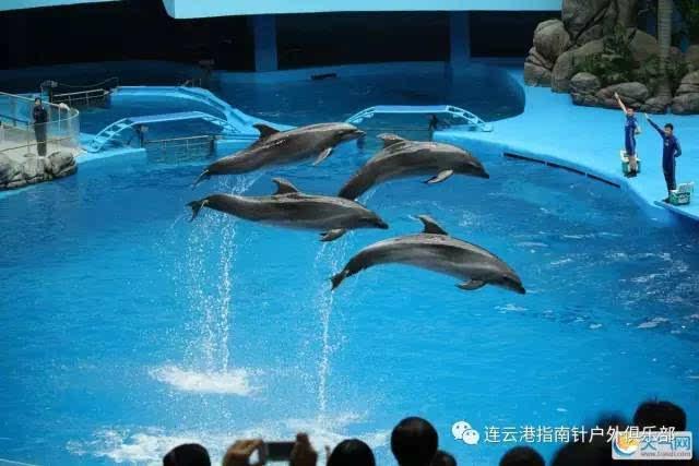 8月9和12号(各一期)青岛极地海洋世界(含海豚表演) 海上游船观光 海滨