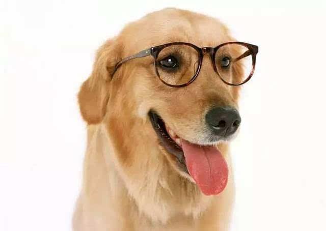 mbti性格分析:你最像哪种动物?
