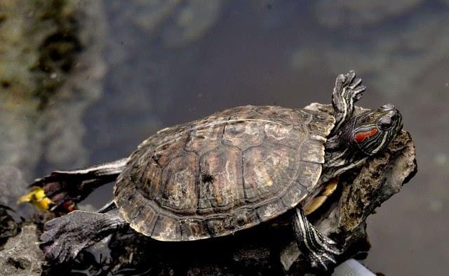 IF段子 怎么跟乌龟称兄道弟