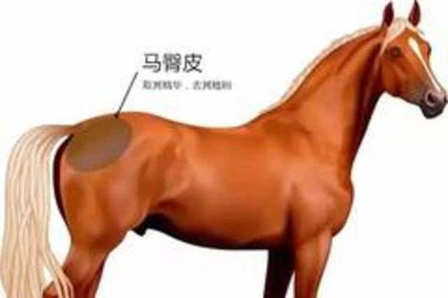 驴,马和野马等马科动物的臀部都有一块肾脏形状的致密皮革,这部分皮革