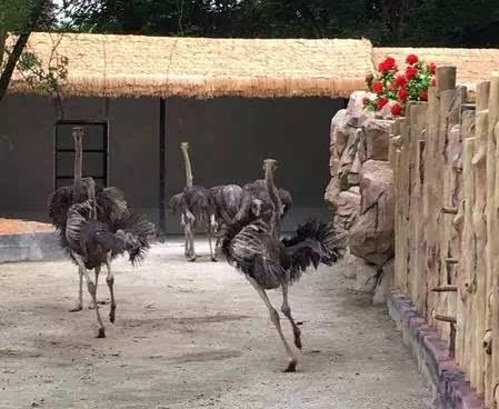 """首只落户中山的动物""""明星""""——长颈鹿,在紫马岭公园安"""