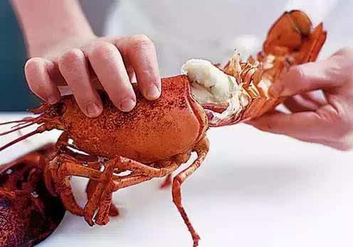 波士顿龙虾的正确吃法,不浪费一点儿虾肉!