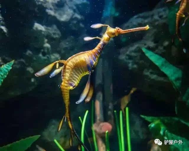 壁纸 动物 海底 海底世界 海洋馆 水族馆 鱼 鱼类 640_511