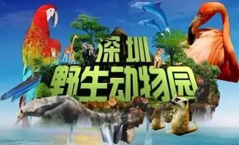 8月12日│深圳野生动物园一日游,汕尾粤运旅行社欢迎你!